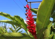 Tiros macro coloridos das flores na ilha de Seychelles imagens de stock royalty free