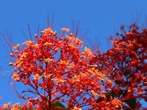 Tiros macro coloridos das flores na ilha de Seychelles fotografia de stock