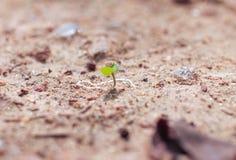 Tiros verdes na areia, no campo do verão A areia sob o sol quente reflete a luz Tiros verdes pequenos, imagem de stock royalty free