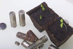 Tiros verdes novos dos brotos em uns recipientes da turfa São cercados pelas baterias gastadas, revestidas com a corrosão ambient foto de stock