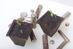 Tiros verdes novos dos brotos em uns recipientes da turfa São cercados pelas baterias gastadas, revestidas com a corrosão ambient fotografia de stock royalty free