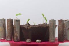 Tiros verdes novos dos brotos em uns recipientes da turfa São cercados pelas baterias gastadas, revestidas com a corrosão ambient imagem de stock