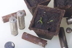 Tiros verdes novos dos brotos em uns recipientes da turfa São cercados pelas baterias gastadas, revestidas com a corrosão ambient imagem de stock royalty free