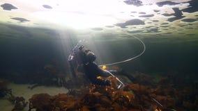 Tiroteo único del buceador subacuático en el fondo del mar en hielo del mar blanco almacen de metraje de vídeo