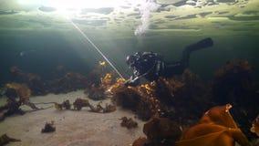 Tiroteo único del buceador subacuático en el fondo del mar en hielo del mar blanco metrajes