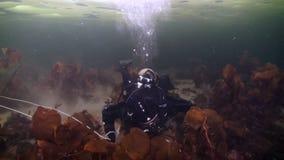 Tiroteo único del buceador subacuático en el fondo del mar en hielo del mar blanco almacen de video