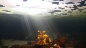 Tiroteo único del underwter del buceador en el fondo del mar en hielo del mar blanco almacen de video