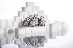Tiroteo creativo de los cubos y de los pingüinos del azúcar Fotografía de archivo libre de regalías