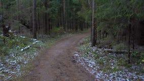Tiroteo del camino fangoso congelado en el bosque del abeto metrajes