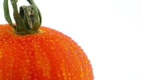 Tiroteo macro de la parte superior del tomate rayado del globo rojo Lentamente girando en la placa giratoria aislada en el blanco metrajes