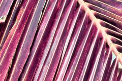 Tirs infrarouges d'imagination de palmier sur les îles des Seychelles photographie stock libre de droits