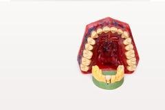 Tirs techniques des modèles sur un laboratoire dentaire images stock