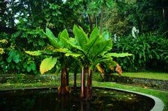 Tirta Gangga. Water palace garden Royalty Free Stock Photo