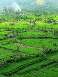 Tirtaganga landscape. Balinese rice field in central east of Bali Royalty Free Stock Image