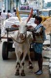 Tirupathi, Андхра-Прадеш, Индия: Неопознанный человек используя тележку вола для того чтобы транспортировать тяжелый груз стоковая фотография
