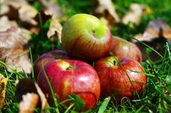 Tis a estação para a sidra de maçã Foto de Stock