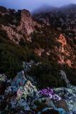 Tis Madaris Teisia животиков на восходе солнца, Кипре Стоковые Фото