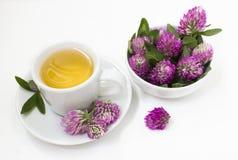 Tisana com as flores do trevo Fotos de Stock
