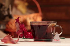 Tisana com viburnum Foto de Stock Royalty Free
