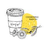 Tisana tirada mão da camomila a ir Copo de chá, flor da margarida Vectror gravou a arte Chá morno cura no copo de papel Alimento ilustração stock
