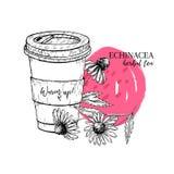 Tisana tirada mão do echinacea a ir Copo de chá, flor do purpurea Vectror gravou a arte Chá morno cura no copo de papel ilustração do vetor