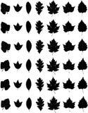 TiskSet des feuilles de chute Image stock