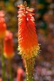 Tisonnier d'un rouge ardent coloré Photo libre de droits