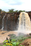 Tiss abay nedgångar på det blåa Nilet River, Etiopien Royaltyfri Bild