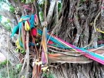 Tissu de lien d'arbre de Bodhi Photo libre de droits