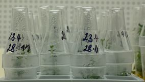Tissu de plantes médicinales de scientifique de recherches pour des buts médicinaux, clone in vitro de chambre de croissance d'es banque de vidéos