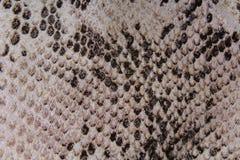 Tissu en plastique de robe de mode de faux de faux de modèle de texture de peau de serpent avec le modèle de serpent Photographie stock libre de droits