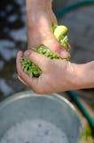Tissu masculin de lavage de main dans un seau de l'eau et de mousse Photographie stock libre de droits