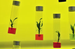 Tissue culture Stock Photo