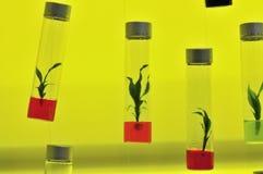 Tissue culture. The rare Orchid Stock Photo