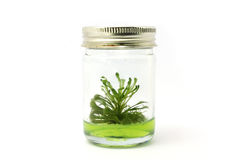 Tissue culture Stock Photography
