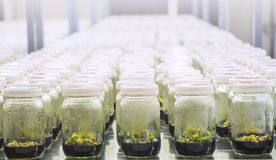 tissue culture laboratory Stock Images