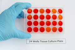 Tissue culture plate Stock Image