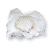 Tissue Paper with shell Royalty Free Stock Image