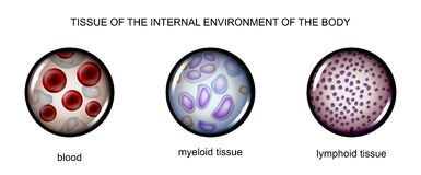 Tissues of the internal environment: blood, lymph, tissue myelin. Vector illustration of tissues of the internal environment: blood, lymph, tissue myelin Stock Image