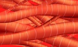Tissus de muscle Photos stock