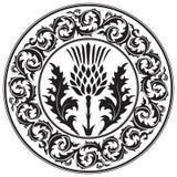 Tistelblomma och rund bladtistel för prydnad Symbolet av Skottland royaltyfri illustrationer