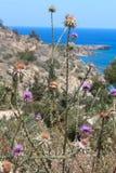Tistelväxt och sten framme av havet Arkivbilder