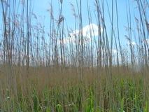 Tisza tó natural reserve area curving pathway Stock Photos