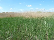 Tisza tó natural reserve area curving pathway Royalty Free Stock Photos