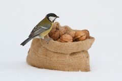 Tit and a bag of walnuts in the snow Stock Photos