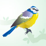 Tit bird on a branch in spring. Blue tit bird on a branch in spring - artistic sheerful illustration Stock Photography