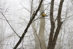 Tit birds on the branch in the winter forest Royalty Free Stock Photography
