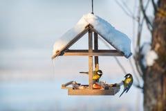 Tit dos en el alimentador nevoso del pájaro del invierno Imagen de archivo libre de regalías