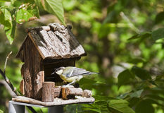 Free Tit Eating Royalty Free Stock Photography - 15869847