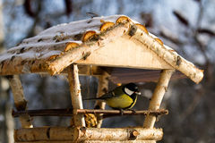 Tit on the feeder Royalty Free Stock Photography